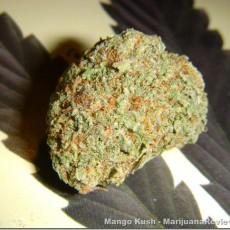 MangoKush