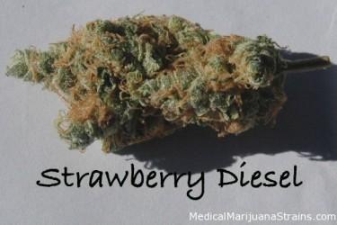 strawberrydiesel