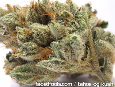 tahoe_og_kush