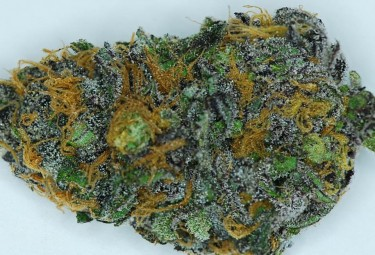 purple-dynamite