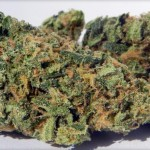 Blueberry Kush