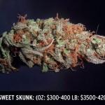 Island Sweet Skunk