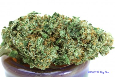 Aug-29-Albert-Walker-OG-001