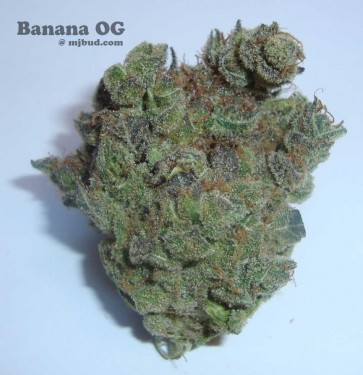 bananaOG
