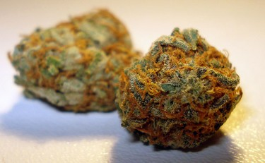 cali-orange-bud