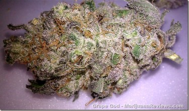 12-15-11---captchronic420---Grape-God1