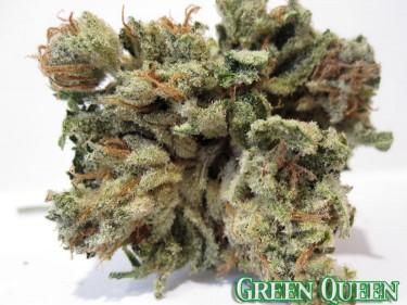 Queen-Green-Strain