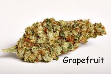 TrojanFanGrapefruit