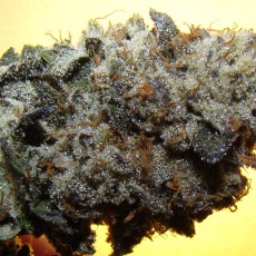 girl-scout-cookies-f-9906060502