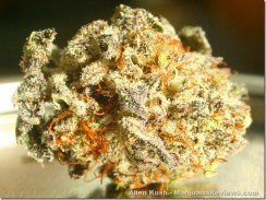 2-12-11-MichNuggets-AlienKush1