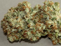 death-star-marijuana-strain-2
