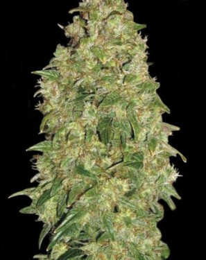 Марихуана дубай пачки марихуаны